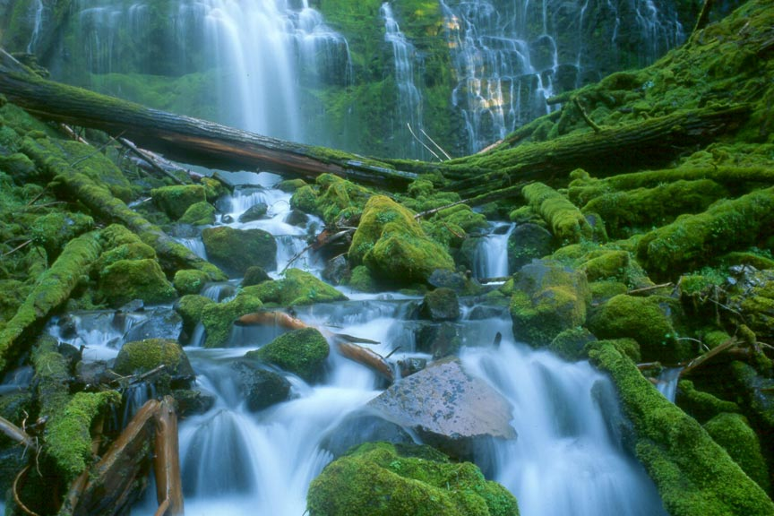 White-water rushes down a small waterfall and over rocks coated in lush green moss.