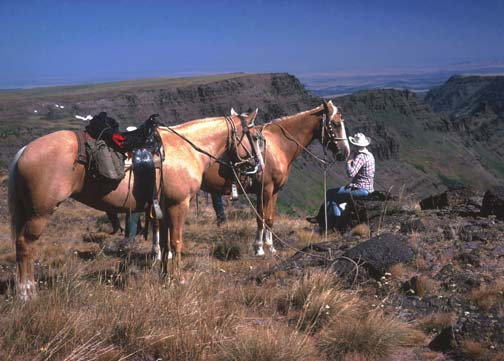 Cowboy with two horses sits on a rock and stares off into the distance down into a large green valley.