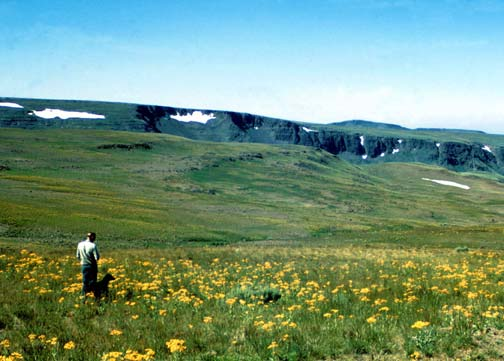 A single person standing on a high alpine plateau, surrounded by a field of yellow wildflowers.