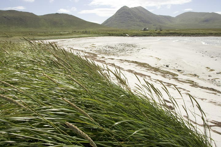 A photo of the beach on Simeonof Island. Where the beach ends is thick with tall wild grasses and rolling hills on bright, sunny day.