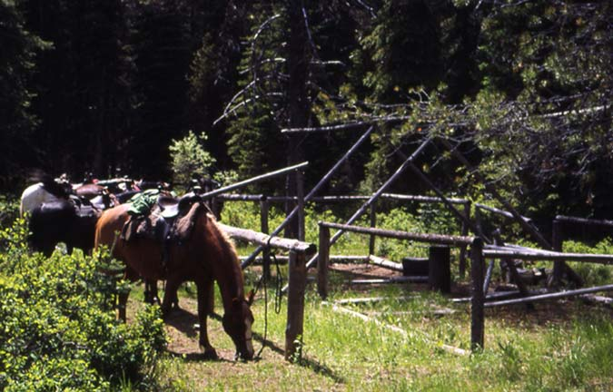 Two horses feeding along the edge of a rough frame structure in a small forest clearing.