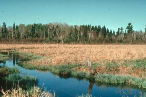 Looking across a large marshy area of golden grass, bordered by a narrow channel of water in the foreground, and forest trees beyond.