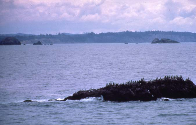A small rocky knob rising from the water, covered in seabirds, near a hazy coastline.