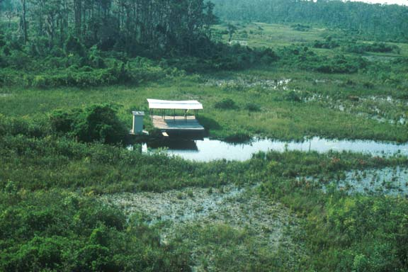 A small manmade platform standing on stilts in the middle of a large green swamp.