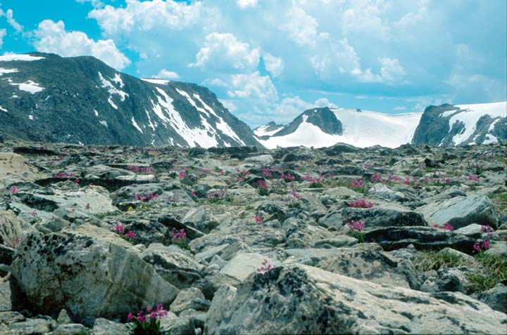 A wide alpine valley covered in large boulders and dotted with pink wildflowers, bordered by high ridges laced with snow, under a blue sky filled with puffy white clouds.