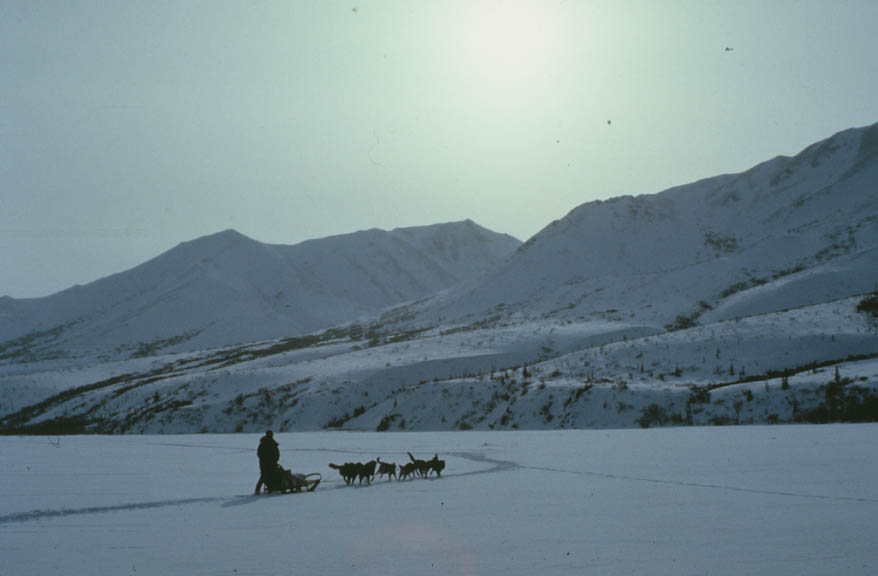 A lone person standing on a sled pulled by a team of dogs, crossing a frozen lake surrounded by white mountains.