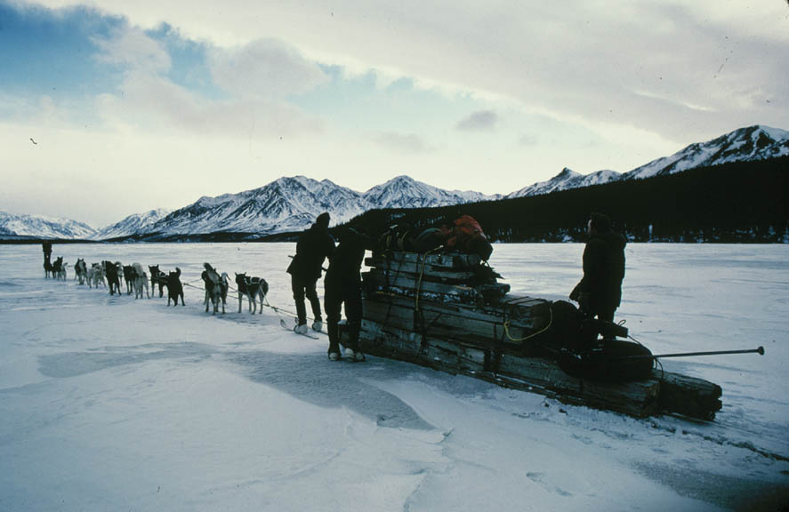 A large team of dogs pulling a sledge with a load of lumber, along a large frozen river surrounded by mountains.