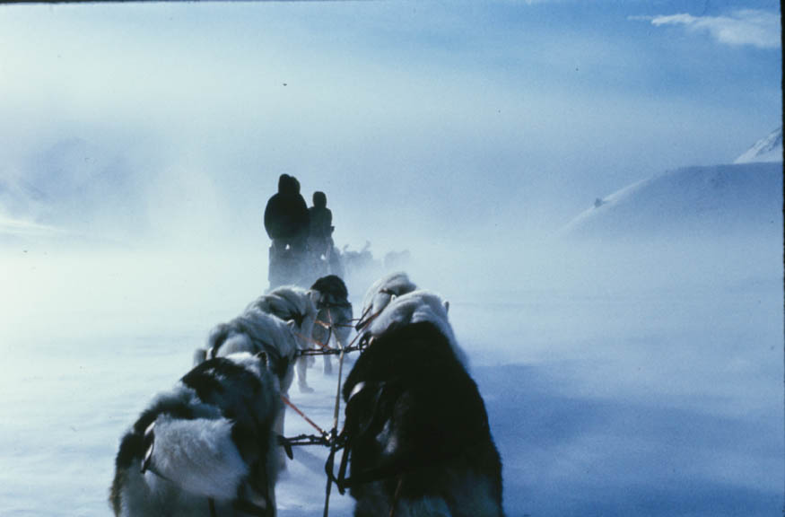 Looking forward from a sled pulled by a team of dogs, dense swirling snow obscuring the landscape ahead.