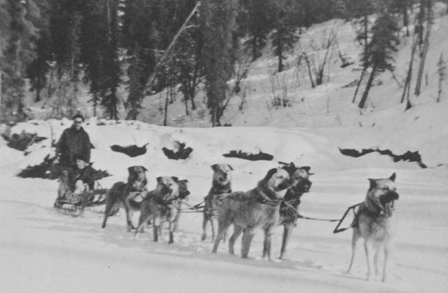 A vintage black and white image of a dog team pulling a sled along a frozen river.