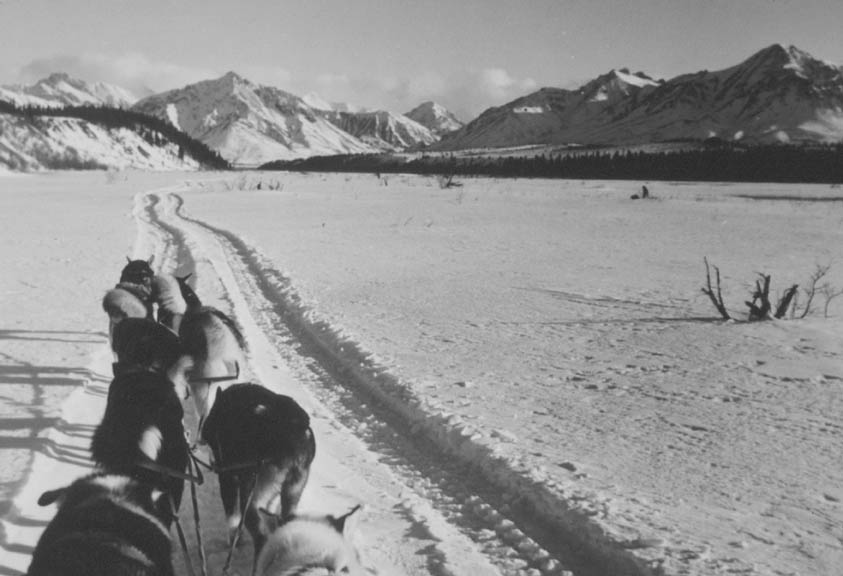 A vintage black and white photograph looking ahead from a sled, being pulled by a team of dogs through an open valley.