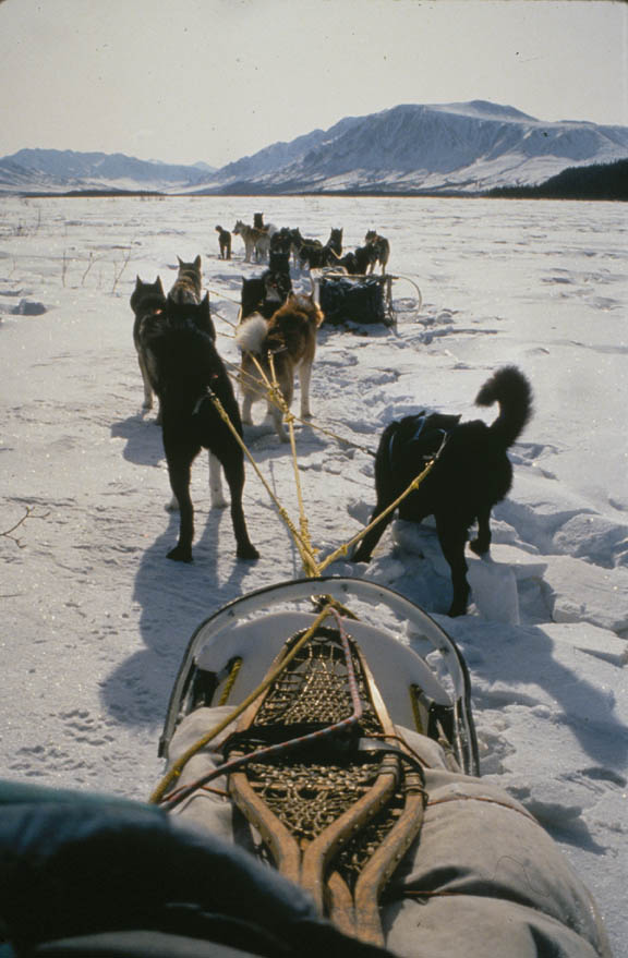 Looking forward from a sled pulled by a team of dogs, traveling out into a frozen river valley bordered by mountains.