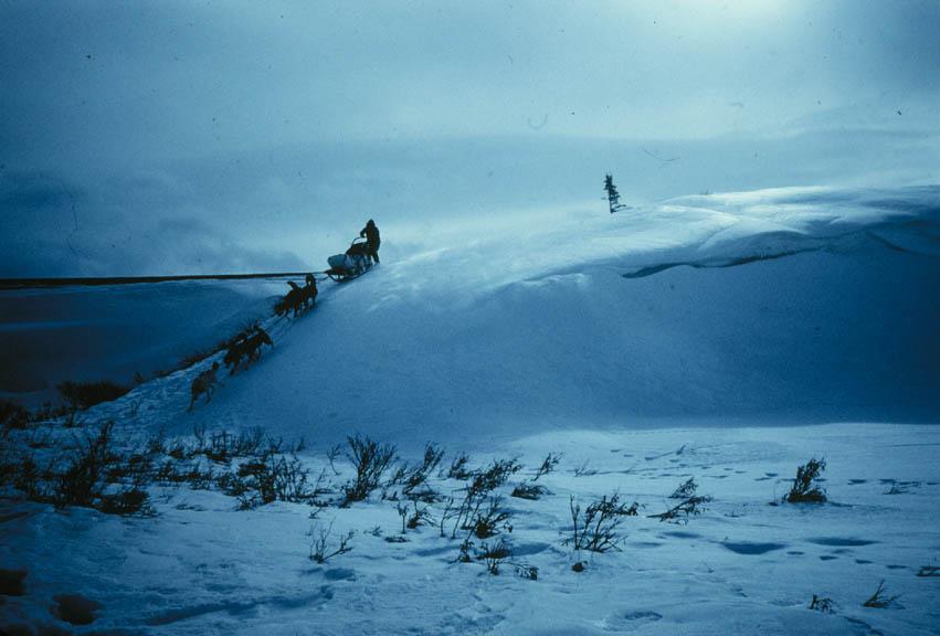 A mean guiding a team of dogs down a snowy ridge.