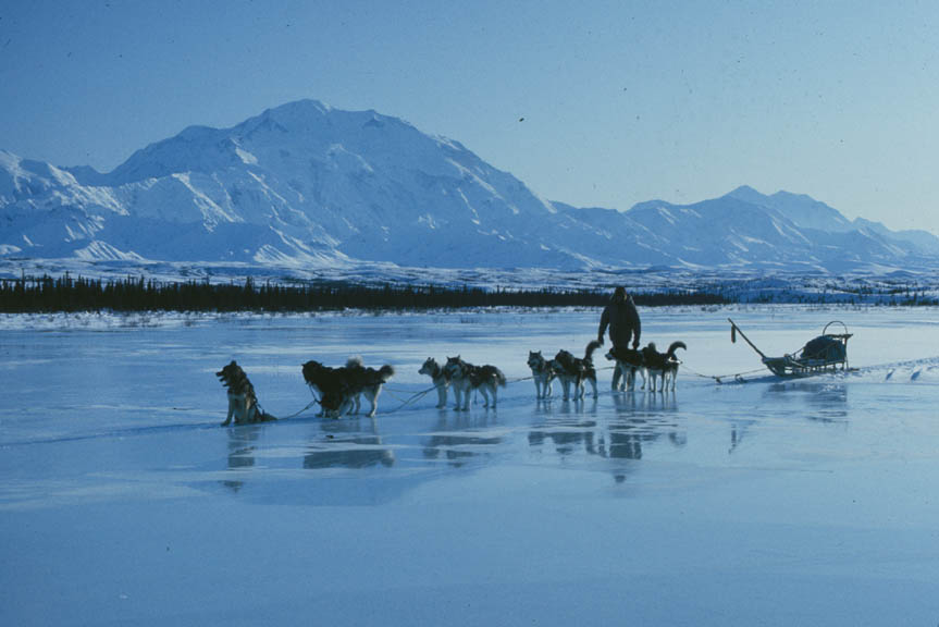 A dogsledder walks beside his team as they cross an ice field. Snow-covered mountains appear in the distance.