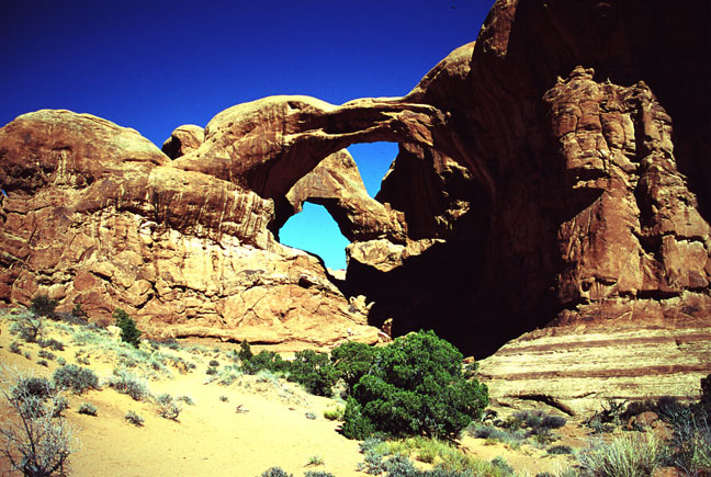 A desert scene of several small bushes growing on the sand in the foreground, with massive sandstone arches rising against a deep blue sky behind.