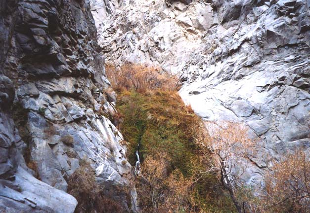 A green swath of low brush, growing at the base of a narrow canyon.