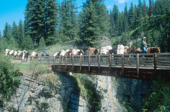 A long string of pack horses, crossing a large wooden bridge above a deep canyon, surrounded by forest.