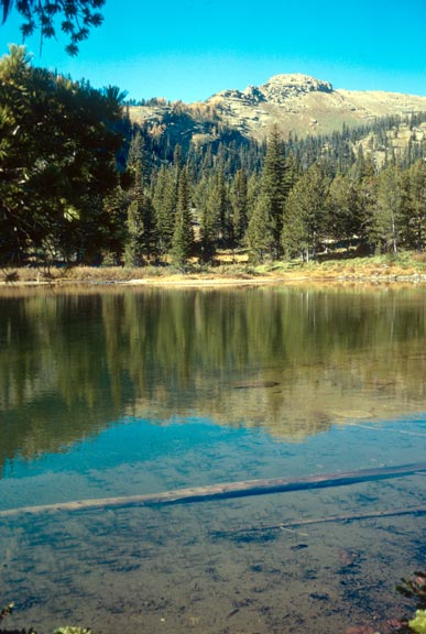 Looking into a clear pond, surrounded by open forest, leading up to an open peak in the background.
