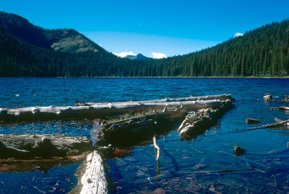 Several large logs along the shore of a blue lake, surrounded by dense forested slopes.