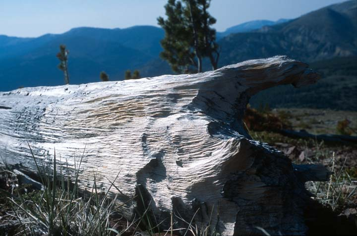 The weathered wind-scoured remains of a large tree lie in the foreground, looking out over a large valley, and forested hills in the distance.
