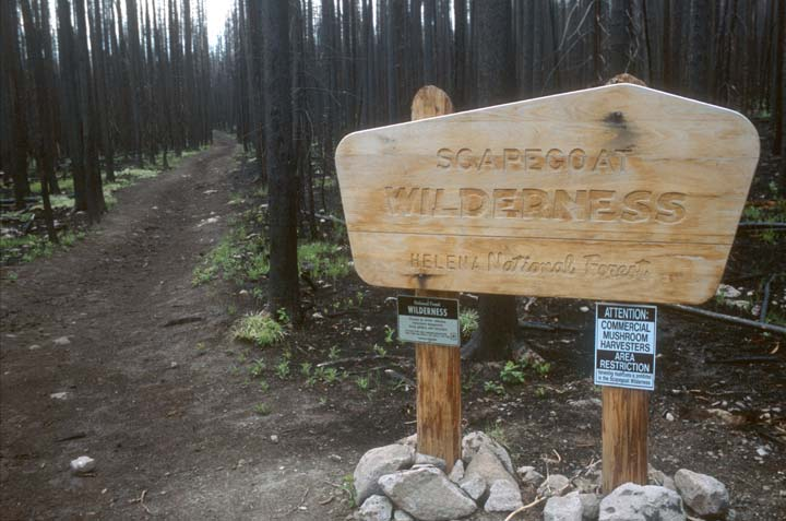 A new wilderness boundary sign, standing along a narrow trail through a dense stand of burned forest.