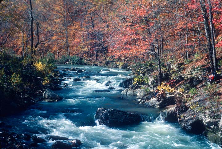 A river rushes over rocks through a forest of deciduous trees in autumn colors.