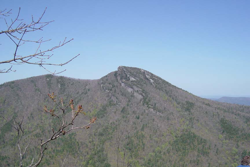 Looking out at a distant mountain, covered in gray forest, striped with green evergreen stands.