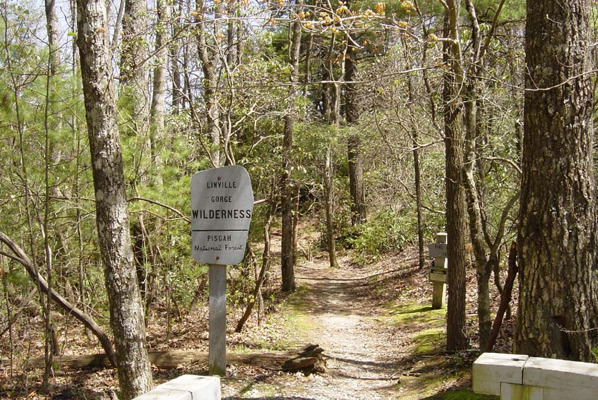 A white wilderness sign stands next to the beginning of a narrow forest trail, winding off through the trees.
