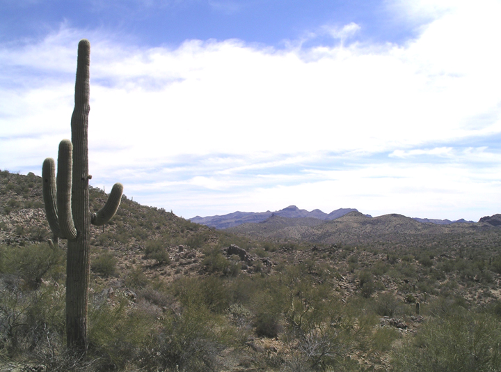 A saguaro cactus dominates the left side of the image.  Desert brambles and a wide sky cover the rest.
