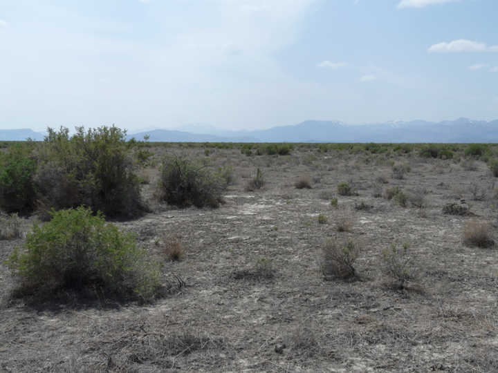 There are only a few scattered bushes to break up the grey sands of this desert scene.