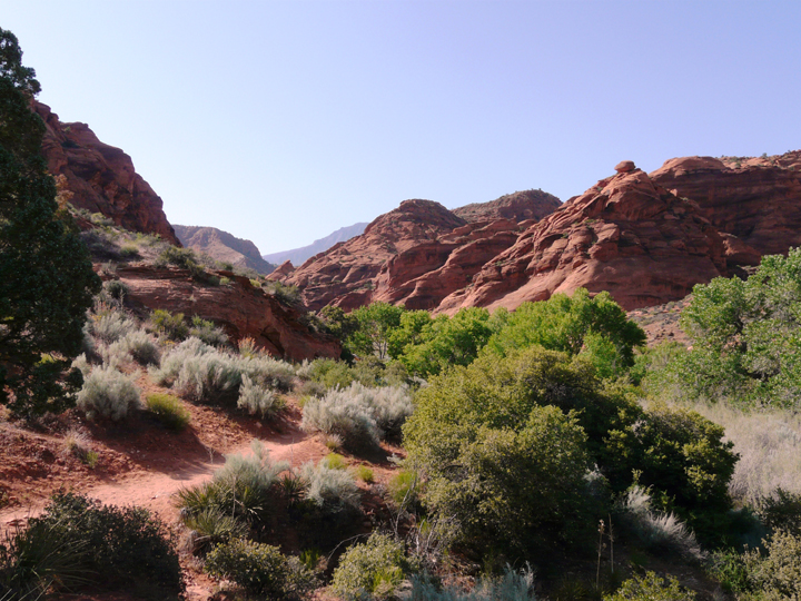 A bunch of greenery blooms in this red canyon.