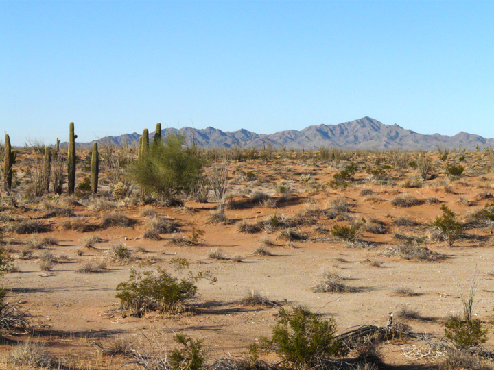 A desert landscape filled with light orange tinted dirt with scattered shrubs and mountains rising up in the far distance.