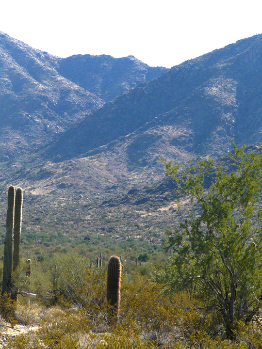 Scattered cacti grow at the base of steep rocky slopes rising up to the sky to form large mountains.