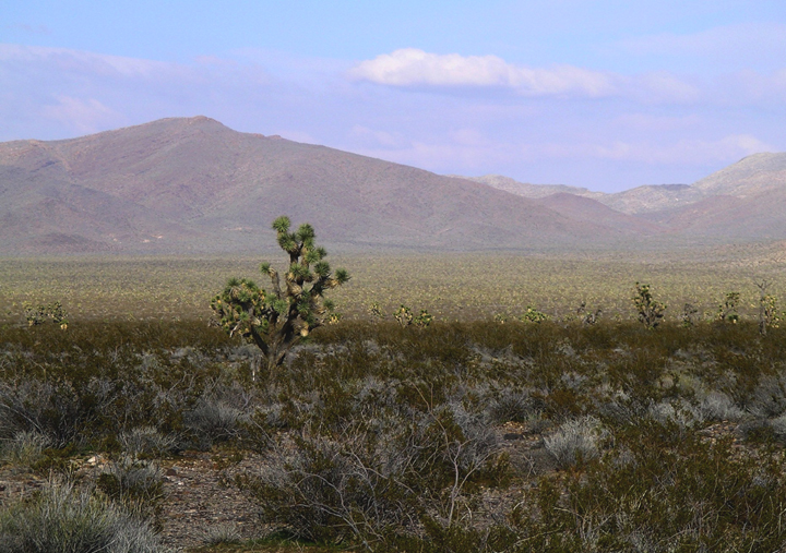 The sun can be seen in the distance, but the desert foreground is in shadow.  A lone tree stands sentinel.