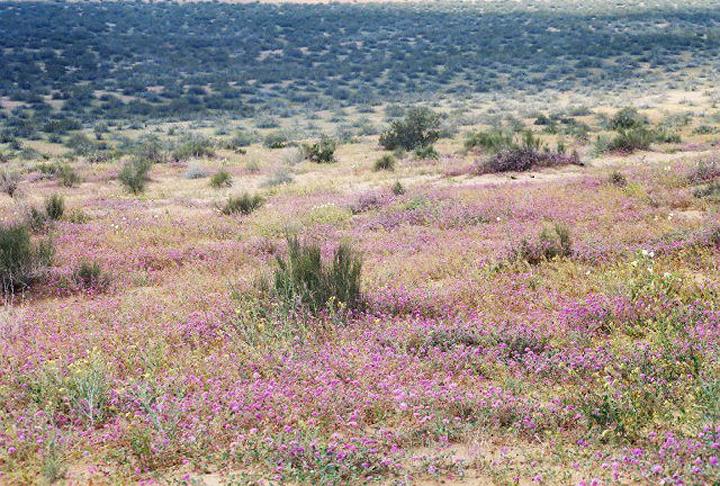 A vivid field of wildflowers spills down a hillside.