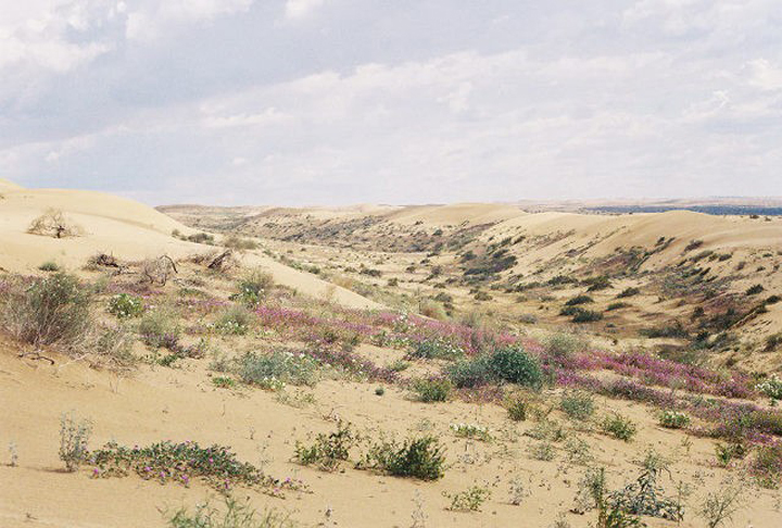 This sandy area is covered in bright patches of green and wildflowers.