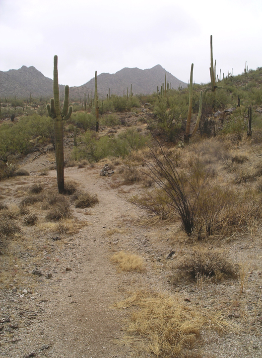 A path winds through a dusty brown desert.  Cacti flank the way.