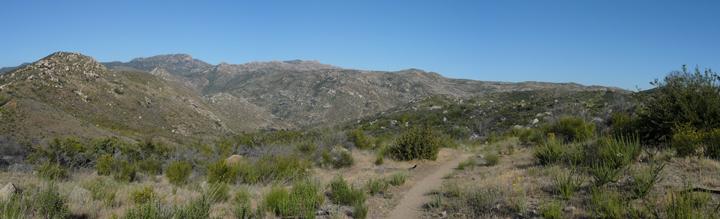 A desert environment is broken up by sharp breen shrubbery.