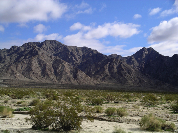 Green shrubs make the desert look less dismal.  They also provide sharp contrast to the dark, rocky mountains beyond.