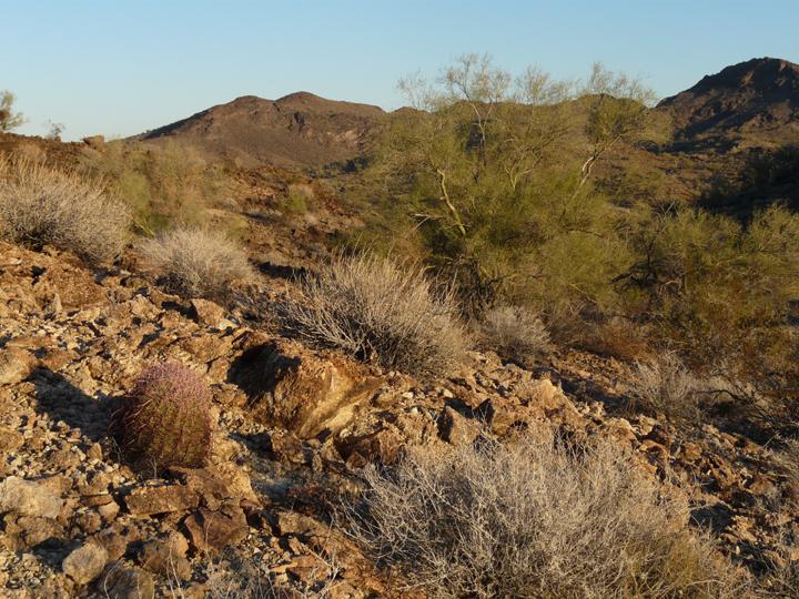A golden light makes this rocky desert scene truly lovely.