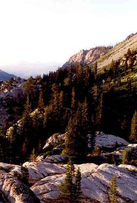 An alpine slope dotted with tall pine, and bare rock outcroppings.