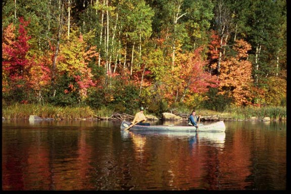 Two men paddle a silver canoe along the edge of a forest painted with vivid autumn colors.