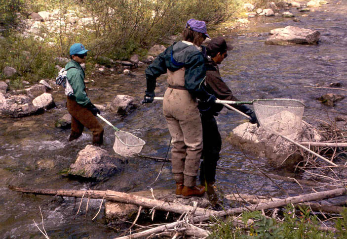 Three agency staff members wearing chest waders, standing in a small rocky stream holding dip nets.