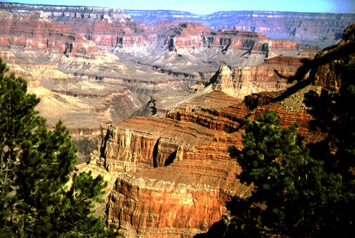 An immense series of canyon faces and gorges far below, seen through a border of green pine branches.