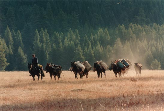 A man leading a string of pack horses through an open field, a cloud of dust rising behind, against a background of forest trees beyond.