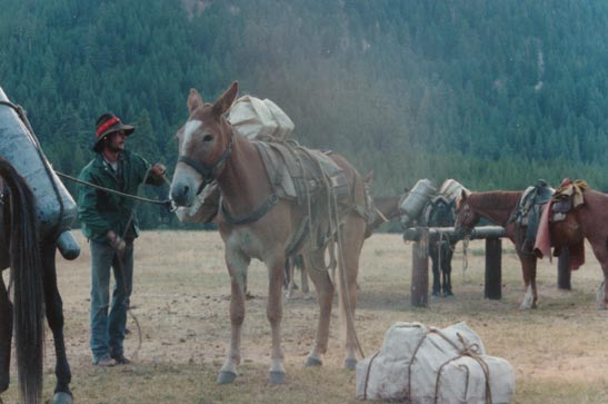A man unloading packages from a large pack mule.