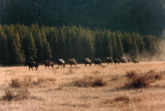 A string of pack horses being led across an open field of golden grass, forest hills rising in the background.