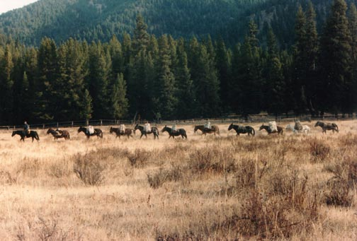 A long string of pack horses, traveling along the edge of the forest through a large field.