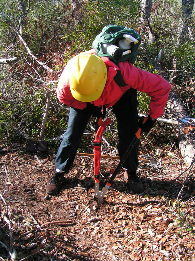 A person in a yellow hard hat and a bright red jacket, using loppers to remove a small stump from the ground.