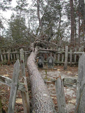 A large tree fallen over a historic cemetery, surrounded by a weathered wooden fence.