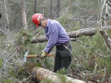 A man in a red hard hat, using a small axe to de-limb a fallen tree.
